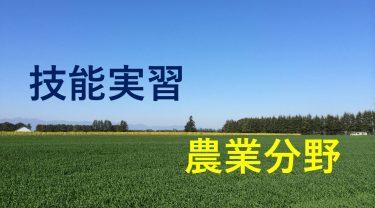 技能実習農業